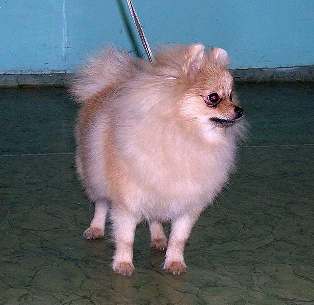 собака хантер фото